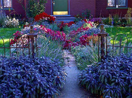 Walkway in Bloom